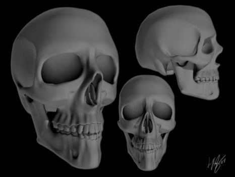 Human Skull 3D by broughl