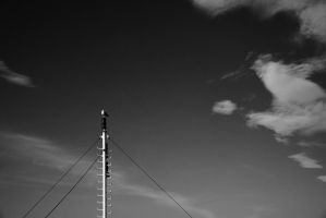 on the pole by obicen