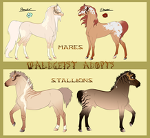 Waldgeist Adopts - Duns! (Points Only) - CLOSED by Drasayer