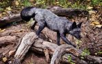 silver-phase  red fox by Yair-Leibovich