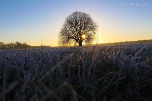 Sunrise on a beautiful frosty winter day 1 by MT-Photografien