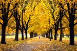Yellow Park by A2Matos