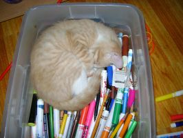 My Kitty In Marker Bin by princesslillymono