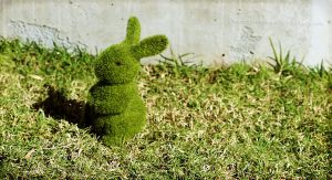 A very rare Grass Bunny by CouchyCreature