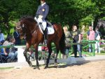 Spanish Iberian Dressage Canter by LuDa-Stock