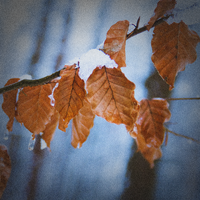 Winter leaf 2 by paradoxofminds