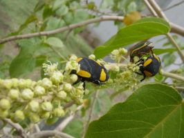 Yellow, Black and Green by Opticnurv