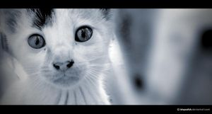Kitty by IshqAatish