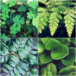 Going green. by naddie-catastrophe