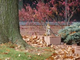 Squirrel Statue by captpackrat