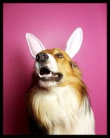 Easter Doggy. by ElectedTheRejected