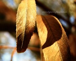 Alive in the sun light by artisticallylearning