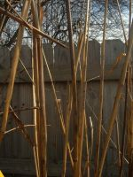 Verical Reeds by sketchydreamerstock