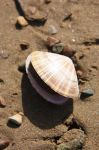 Just a shell by zmeisa