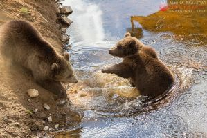 Playful cubs. by Ravenith