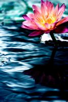 Water Lilly 16 by Art-Photo