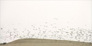 Dunes 10 by rici66