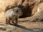 Tiny baby, don't be afraid by world ! by MorganeS-Photographe
