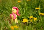 Fluttershy goes for a walk by NightGhost-creations