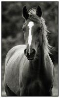 Gentle Mare by thisisyesterday