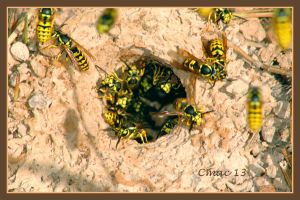 crowding in and out by Cmac13