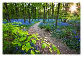Bluebell Trail by Meowgli