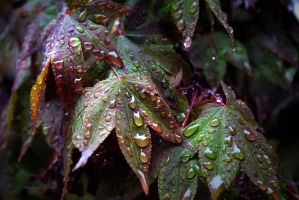 Soggy Wet Leaves by desmo100