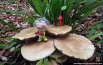 Olimar Says Go! by MeMiMouse