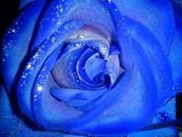 Blue rose... by MorticiaVamp