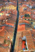 Rooftops of Lucca by pjones747