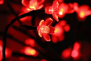 Artificial flowers have their own beauty by jatenk