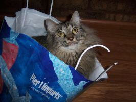 Cat in a sack 1 by Minicorndogs