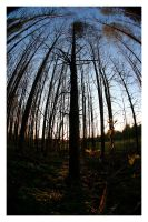 Forestview Vertical by Shaggy87