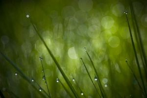 Dew by duris
