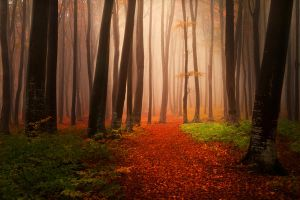 Foggy Misty Autumn Forest 6 by khoirulmahmudinstock