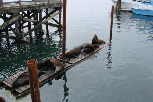 Seals by Ozzyhelter