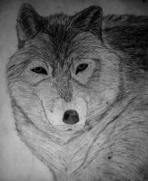 Wolf by KristianS