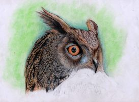 owl project by blacksoulgraphics