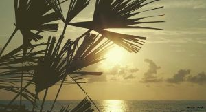 sea palm by fabulous23