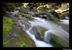 Flowing - Williams River 4 by robertvine