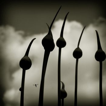 Lifeforms by Coffea