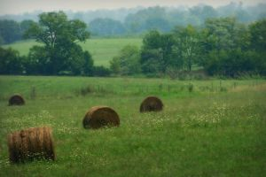 Green Pastures by ncphotojunkie