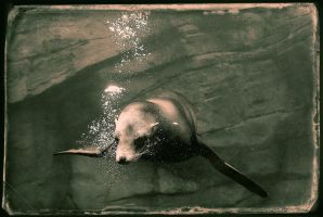 Sealion by denjazzer