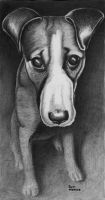 The Puppy by ronmonroe