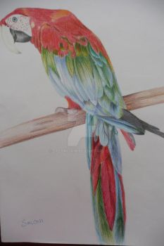 Macaw by Salonijain