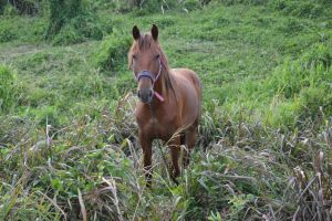 Horse of Martinique for Trollwaffle birthday by A1Z2E3R