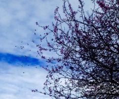 Melody of Birds: (Part of Symphony of Spring) by Assassinennoire