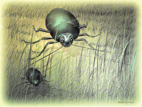 Insects by altergromit