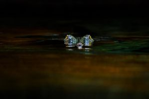 Gharial by LifeCapturedPhoto