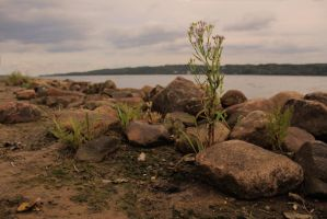 The Rocks, On the Coast, With the Plant by Scout2Freak